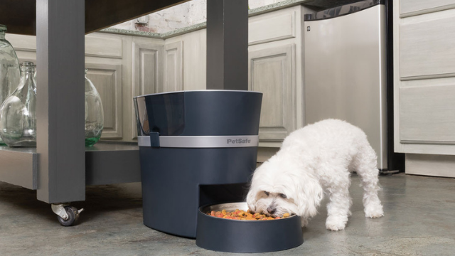 The 10 Best Smart Pet Feeders in 2021